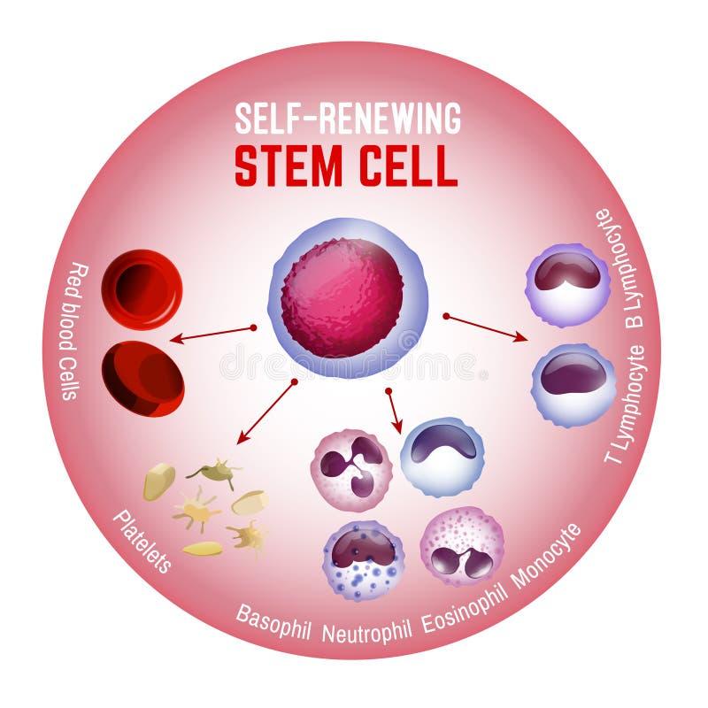 célula estaminal derenovação ilustração royalty free
