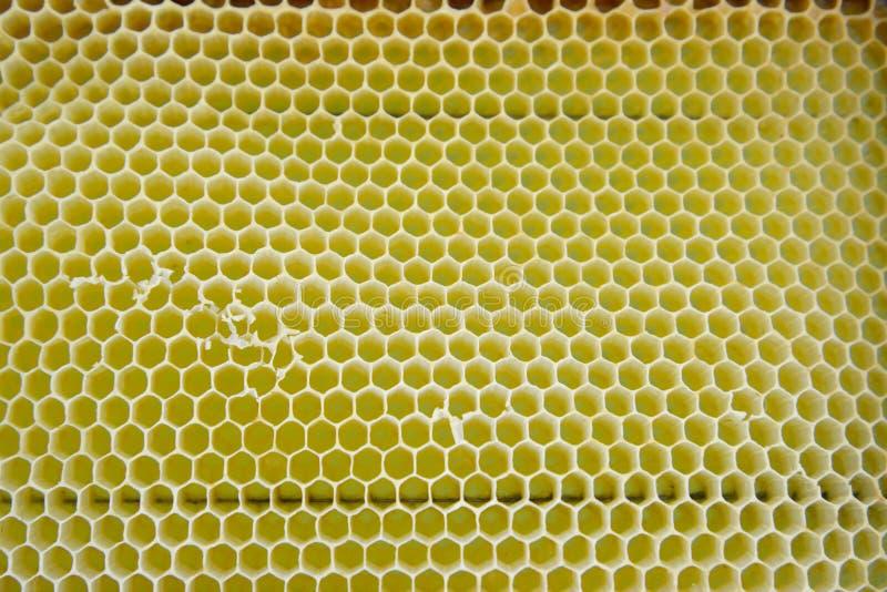 Download Células Amarillas Vacías De La Abeja, Fondo Imagen de archivo - Imagen de fondo, geométrico: 64212869