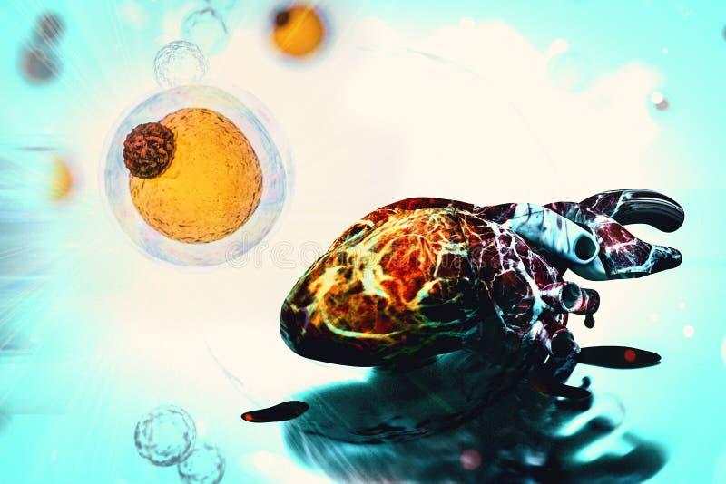 Células Cancerosas Humanas De La Salud Del Corazón Del Concepto De ...