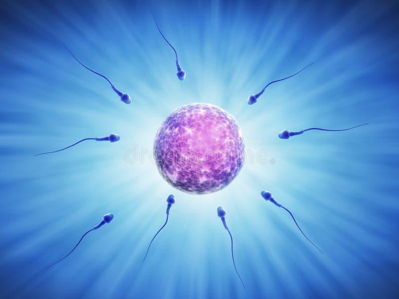 Células de esperma humanas durante la fertilización libre illustration