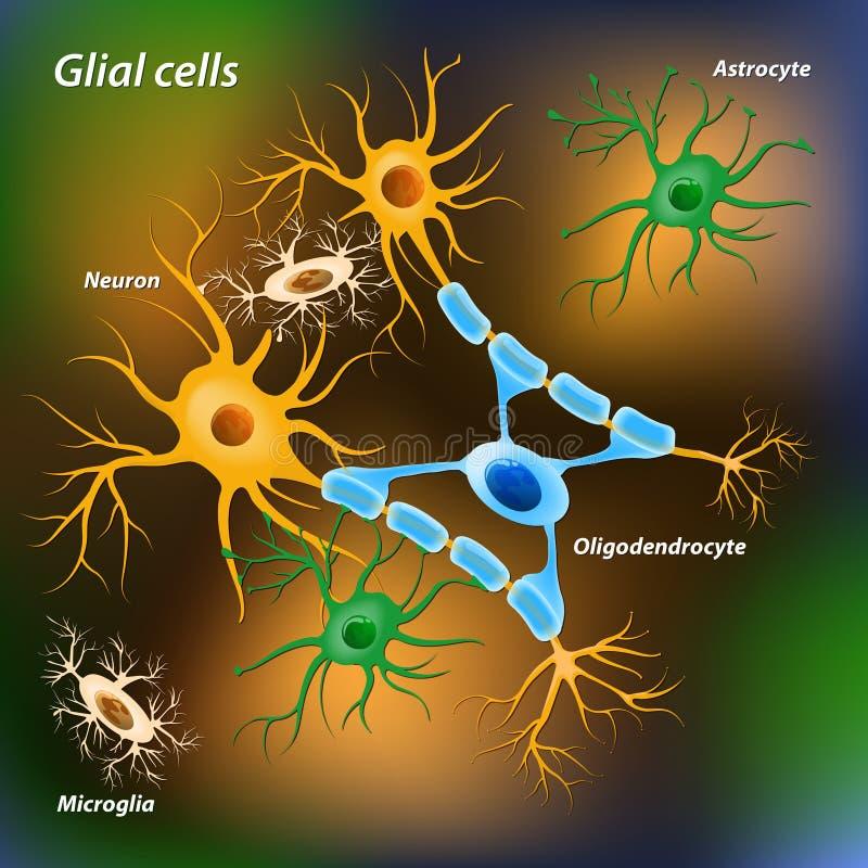 Células de Glial stock de ilustración