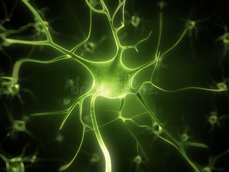 Células nerviosas activas stock de ilustración. Ilustración de ...