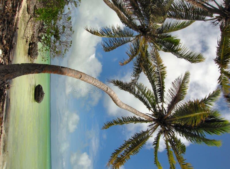 Cénico tropical imagem de stock