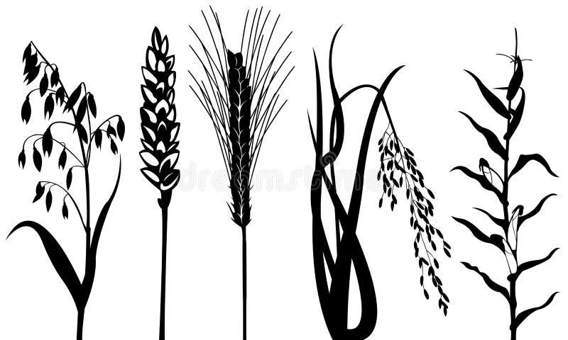 Céréales illustration stock