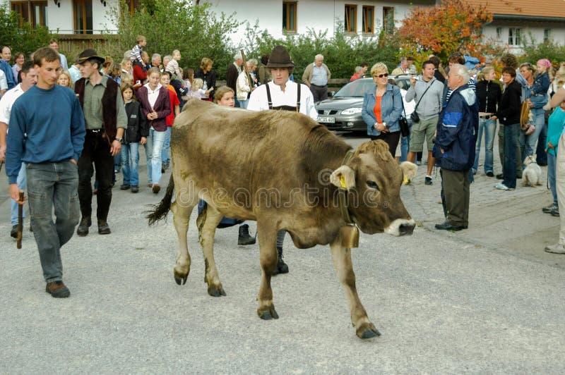 Cérémonial entraînant une réduction des bétail par la montagne images stock