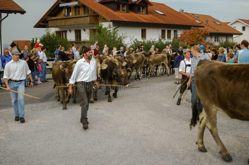 Cérémonial entraînant une réduction des bétail par la montagne photo stock
