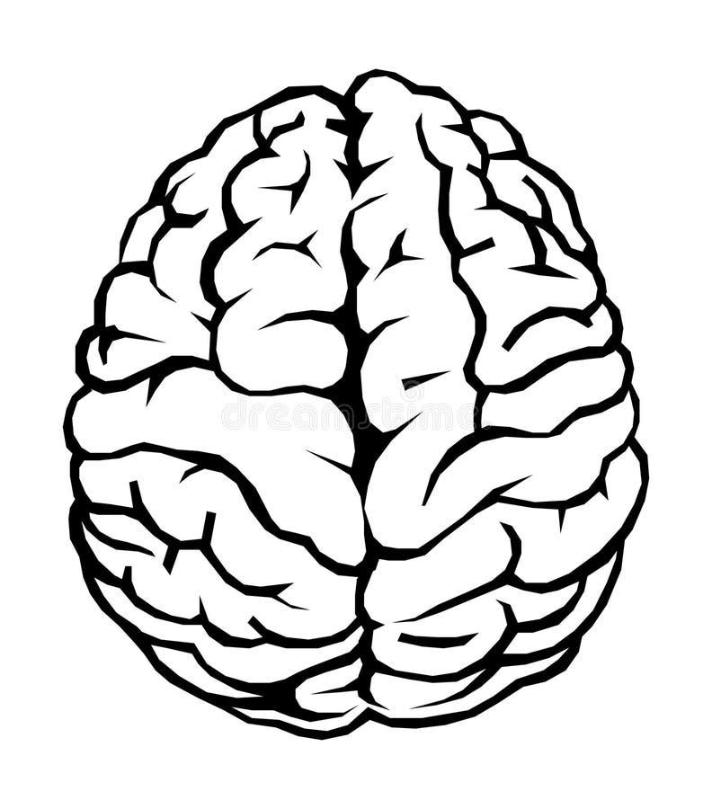 Cérebro imagens de stock