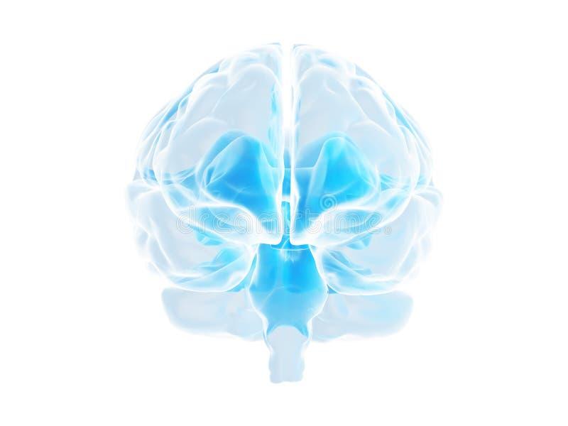 Cérebro ilustração do vetor