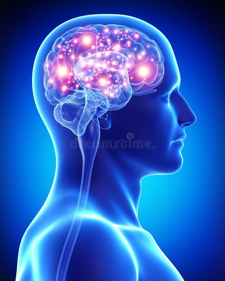 Cérebro ativo masculino ilustração do vetor