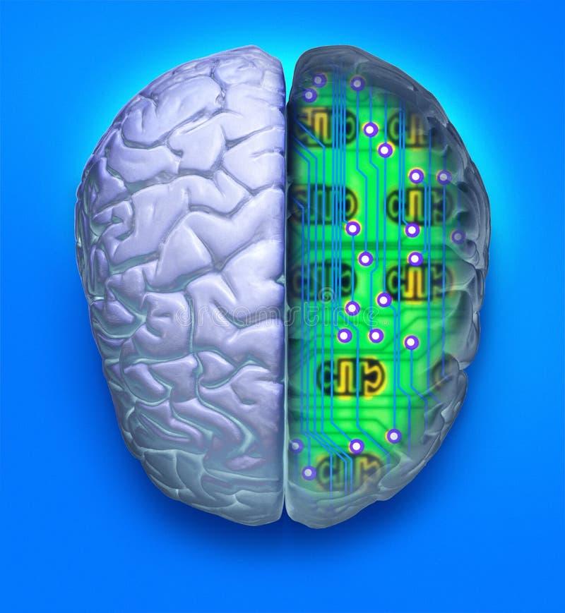 Cérebro azul do computador ilustração royalty free