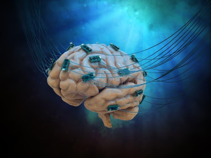Cérebro conectado fotos de stock