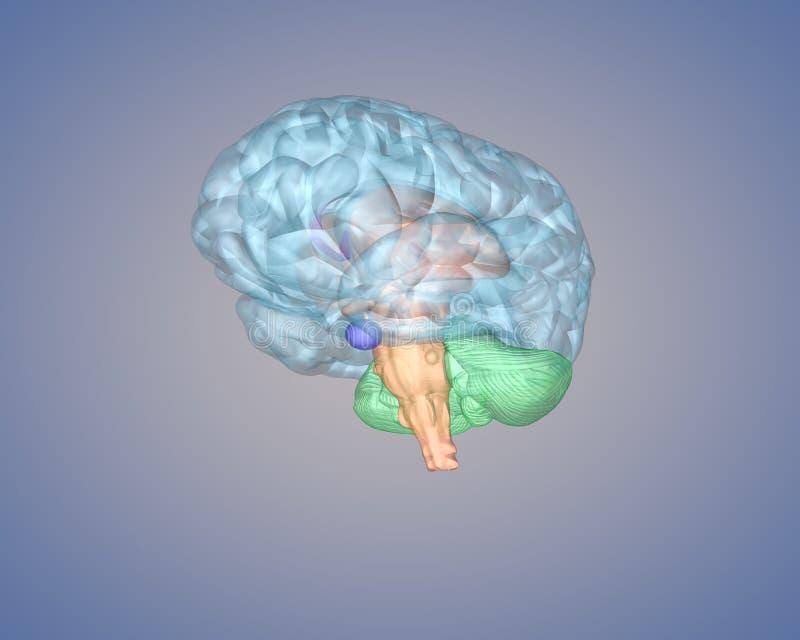 cérebro 3d ilustração stock