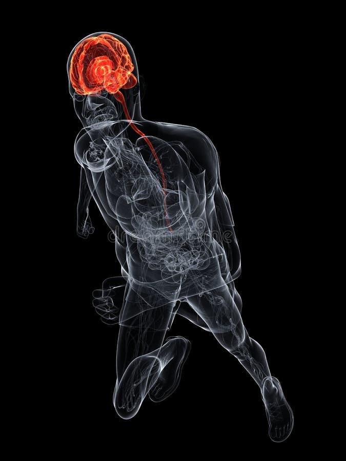 Cérebro destacado ilustração stock