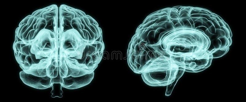 Cérebro dianteiro e lateral do raio X ilustração do vetor
