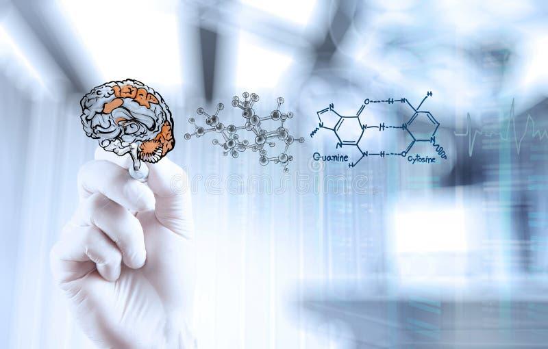 Cérebro do desenho da mão do neurologista do doutor foto de stock royalty free