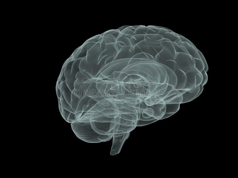 Cérebro do raio X ilustração royalty free