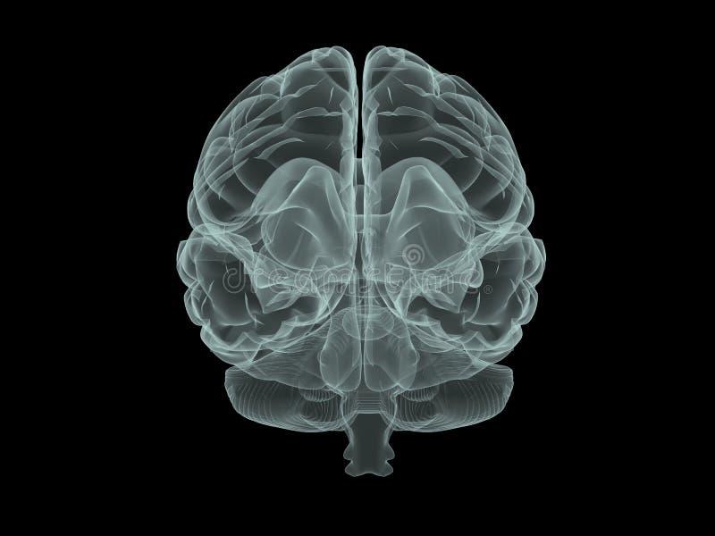 Cérebro do raio X ilustração stock