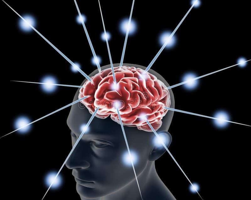 Cérebro humano ilustração royalty free