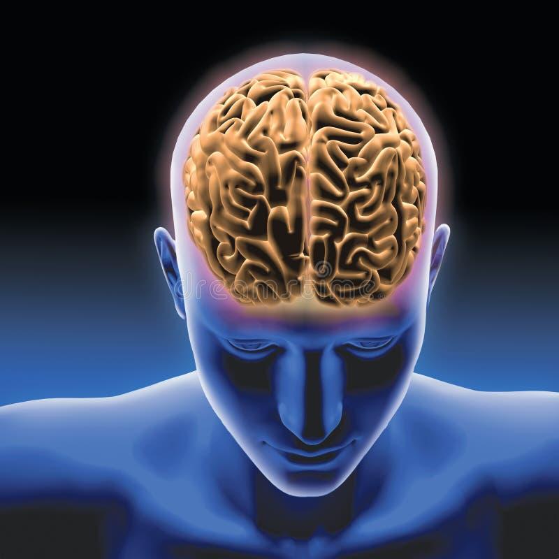 Cérebro humano com homem azul fotos de stock