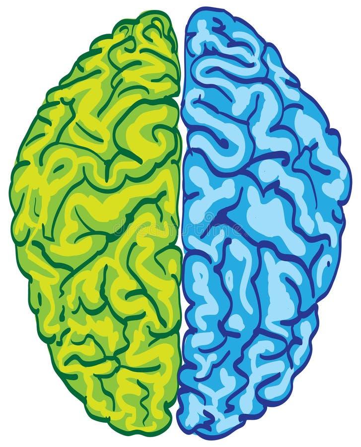 Cérebro humano da cor ilustração royalty free