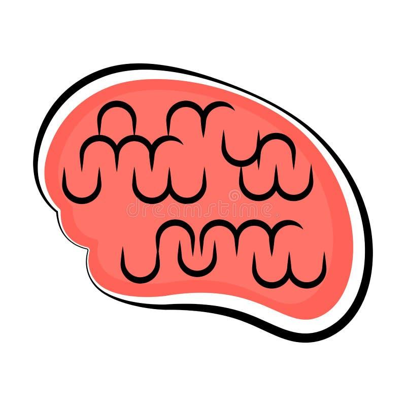Cérebro humano isolado Esboço colorido ilustração royalty free