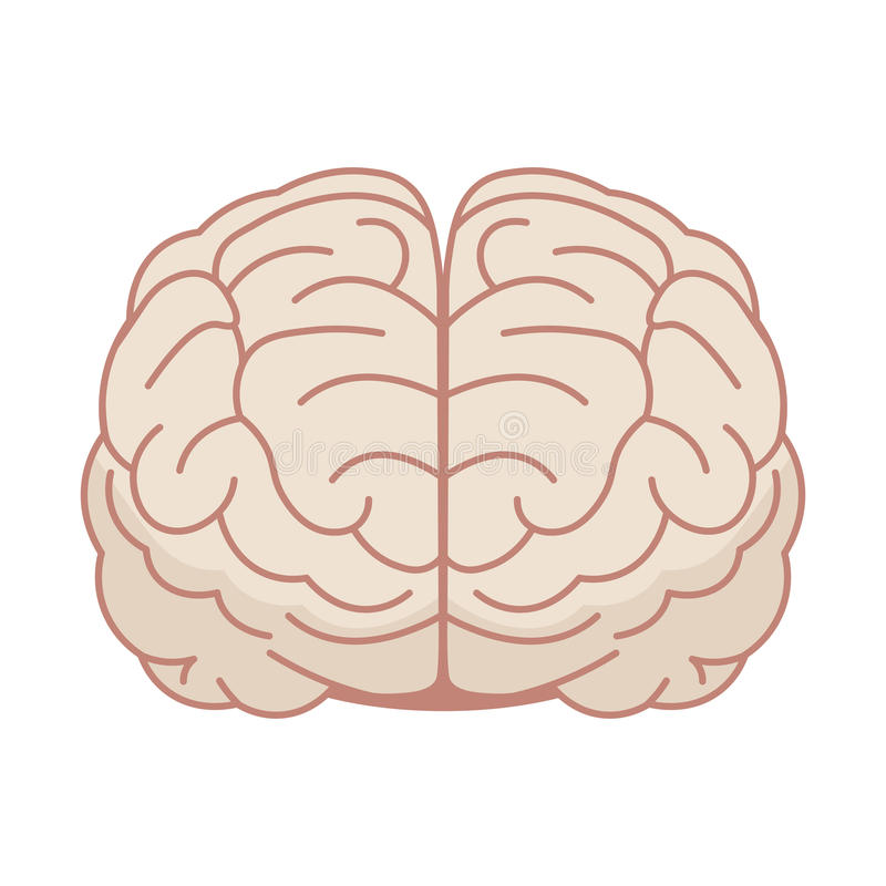 Cérebro humano no estilo liso Ilustração do vetor Front View ilustração stock