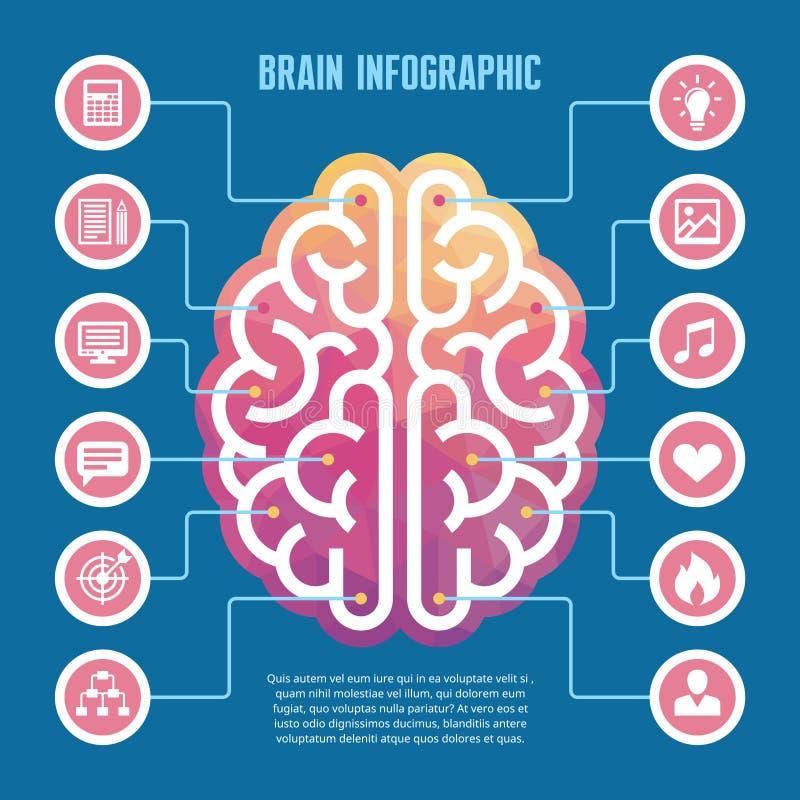 Cérebro infographic - vector a ilustração do conceito com ícones Ilustração esquerda e direita do vetor do cérebro humano para a  ilustração royalty free