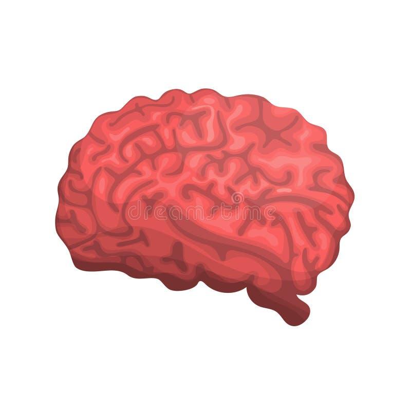 Cérebro ou ícone do vetor da opinião lateral da mente para apps e Web site médicos ilustração do vetor