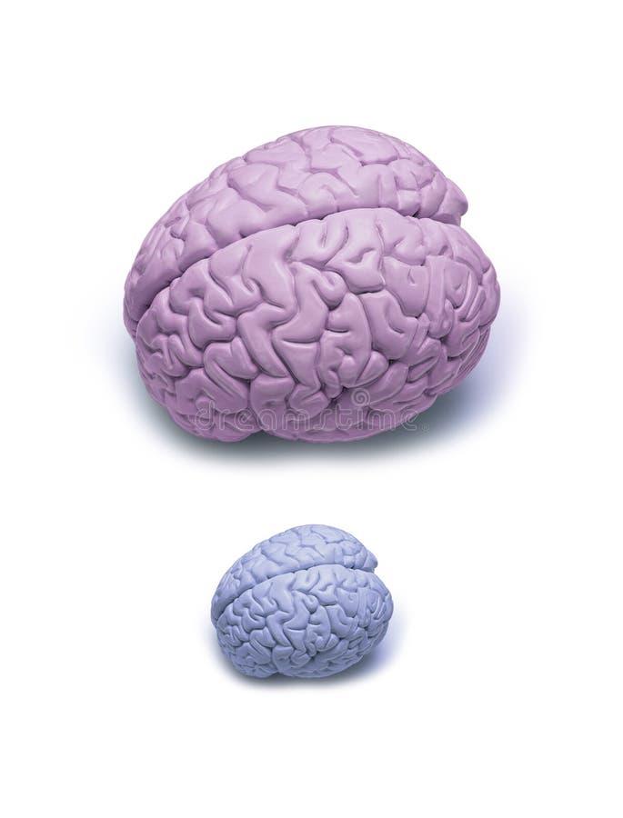 Cérebro pequeno do homem fotografia de stock