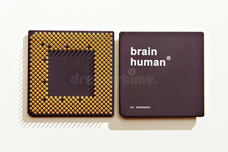 Cérebro-processador humano fotografia de stock