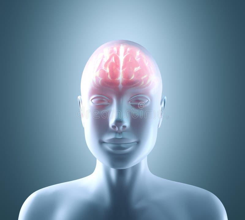 Cérebro quente ilustração royalty free