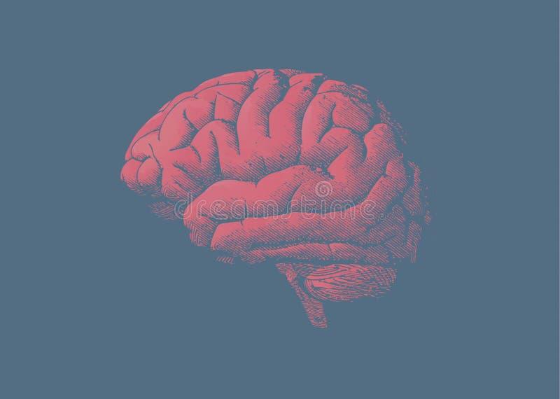 Cérebro vermelho do matiz da gravura no fundo azul ilustração royalty free