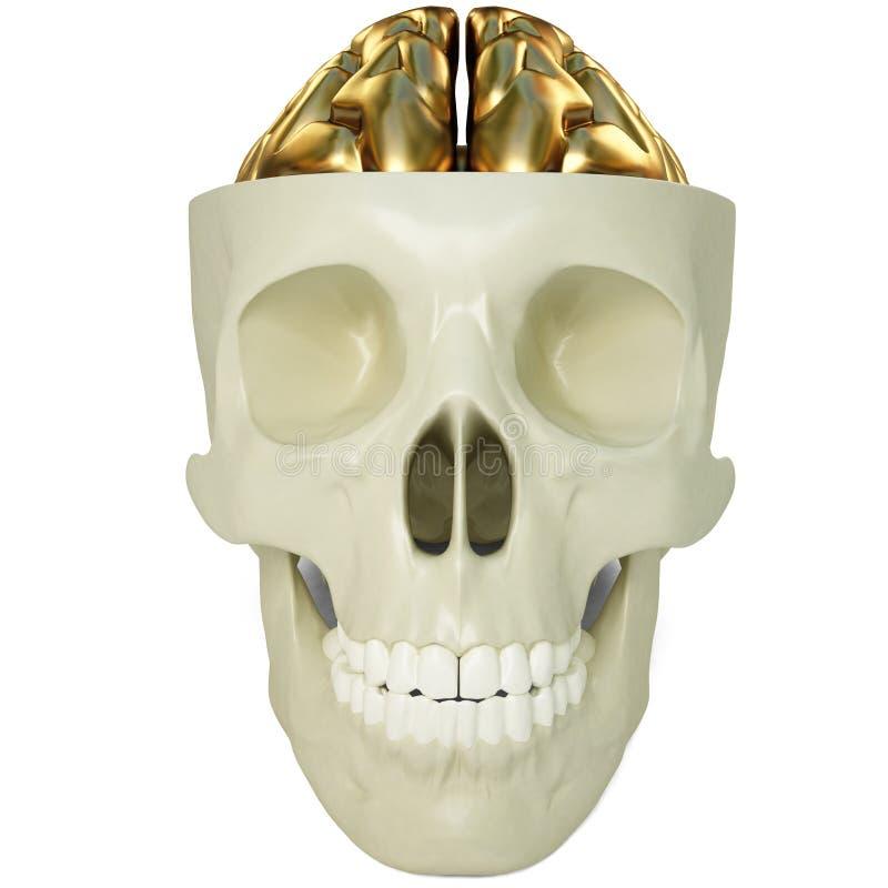 Cérebros dourados ilustração stock