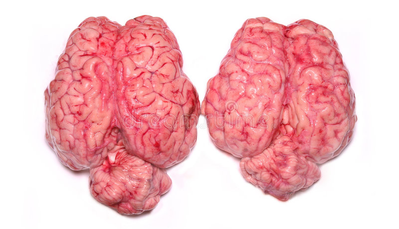 Cérebros reais fotos de stock