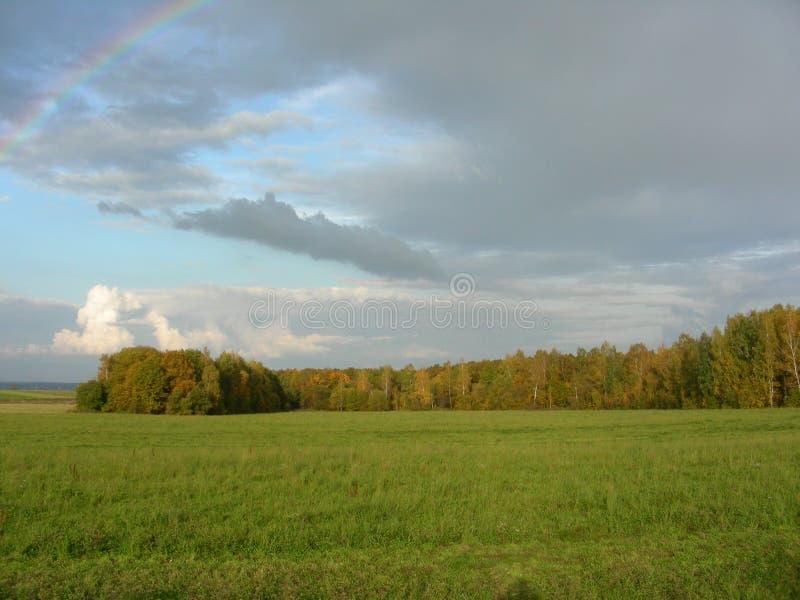 Césped con la hierba verde y árboles en el fondo foto de archivo libre de regalías