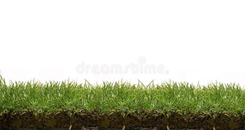 césped de la hierba imagenes de archivo