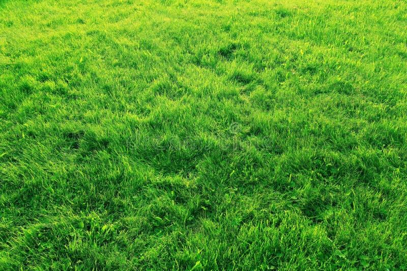 Césped de la textura de la hierba verde foto de archivo