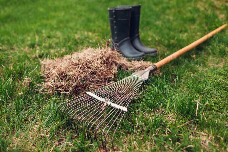 Césped de limpieza de la hierba seca con un rastrillo en jardín de la primavera Montón de la hierba con las botas y la herramient imagenes de archivo