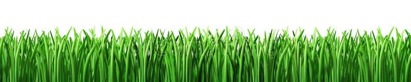 Césped del verde de hierba aislado ilustración del vector