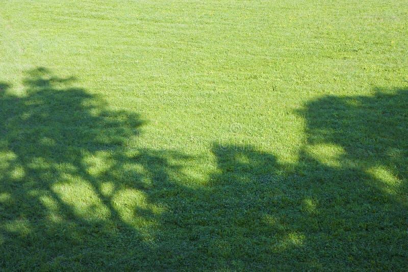 Césped segado verde con la sombra del árbol imagen de archivo