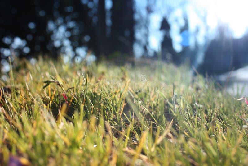 Césped verde herboso enfocado, tema principal el fondo restante y desenfocado naturaleza genérica imagen de archivo libre de regalías