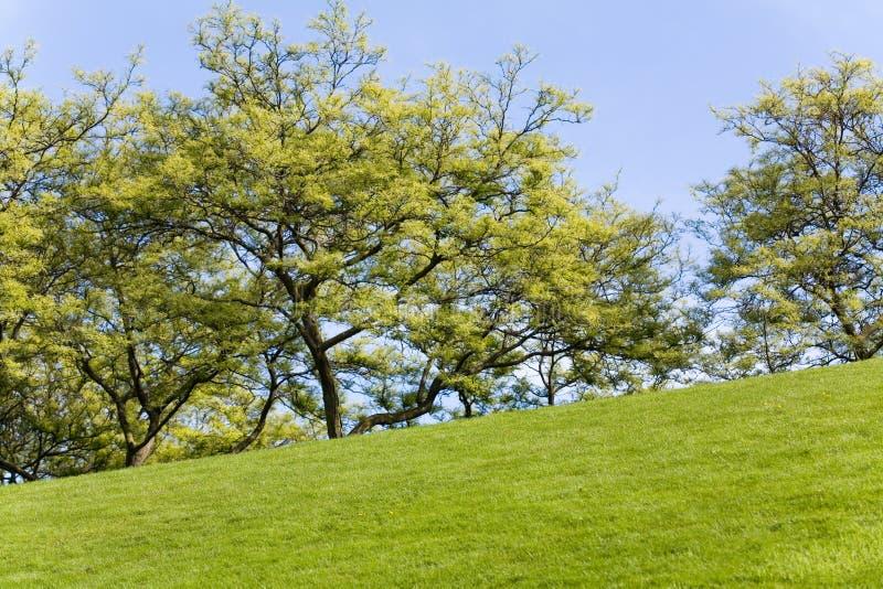 Césped y árbol verdes imagen de archivo libre de regalías