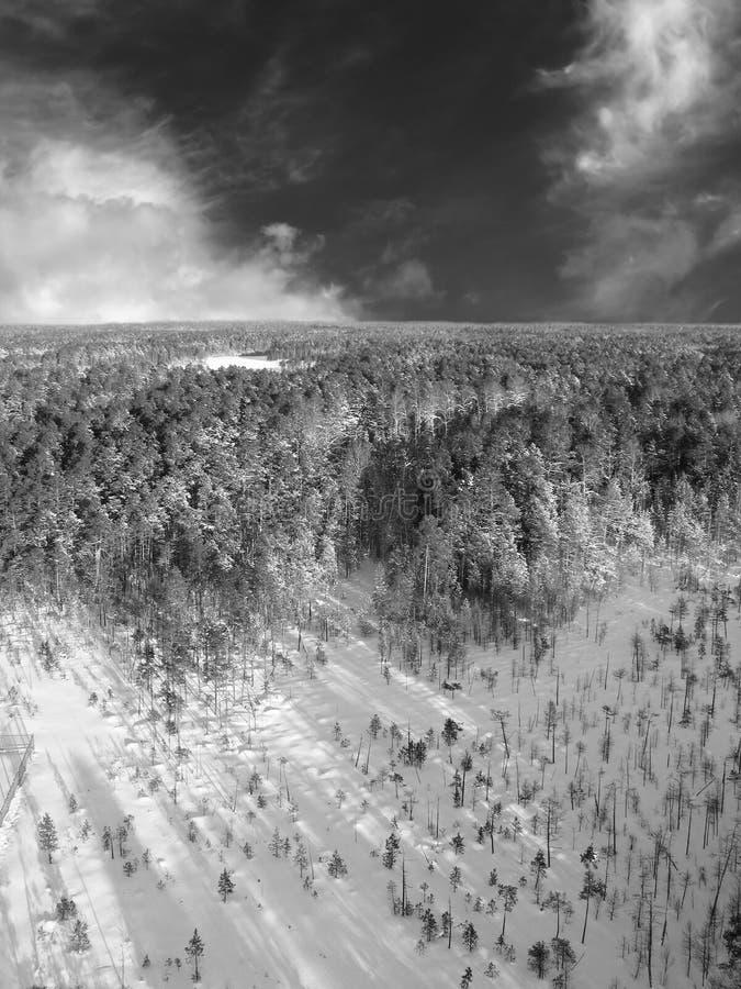Céu aéreo do taiga fotos de stock royalty free