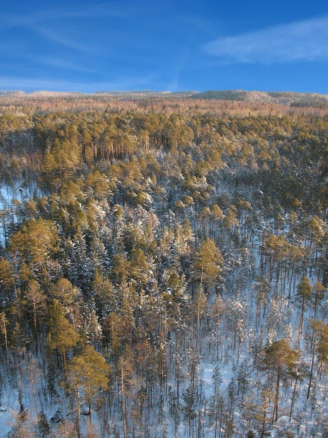 Céu aéreo do taiga 8 fotos de stock