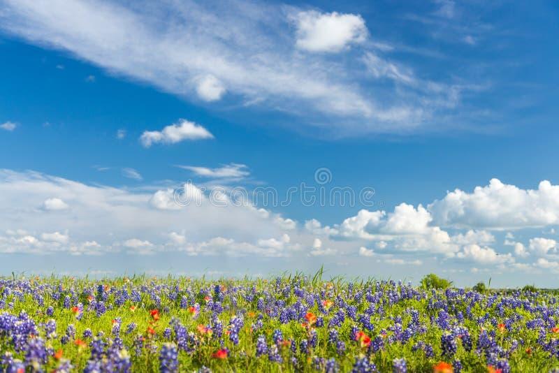 Céu arquivado e azul do Wildflower imagem de stock royalty free