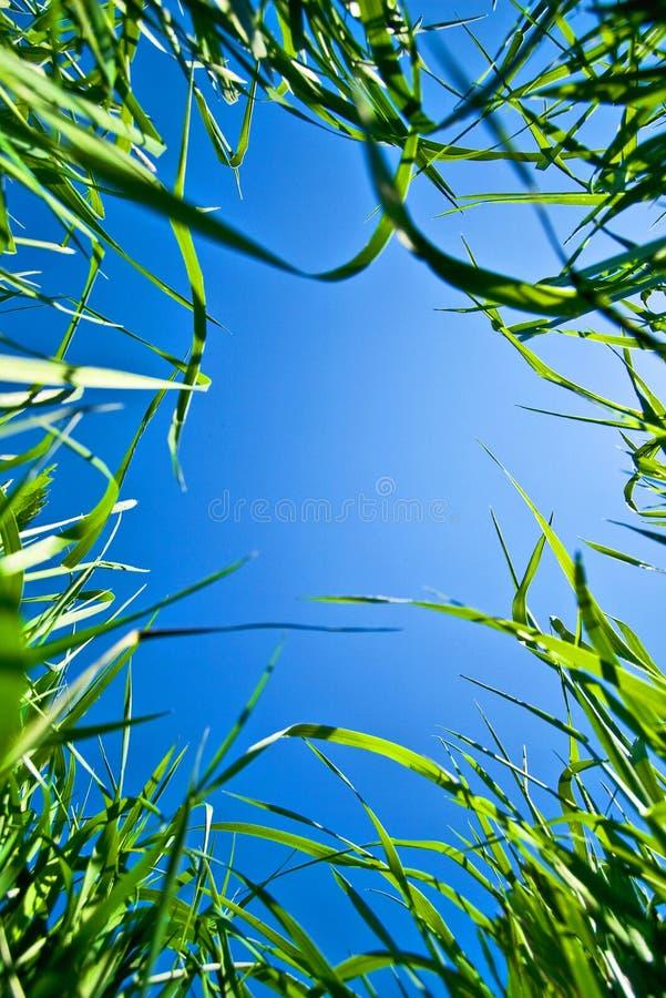 Céu através da grama fotografia de stock