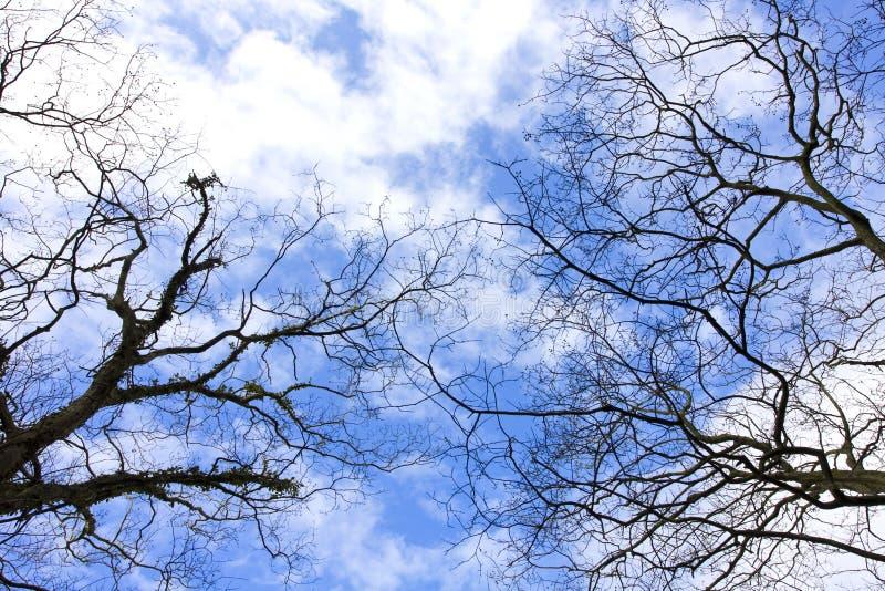 Download Céu azul. imagem de stock. Imagem de geada, dezembro - 12811645