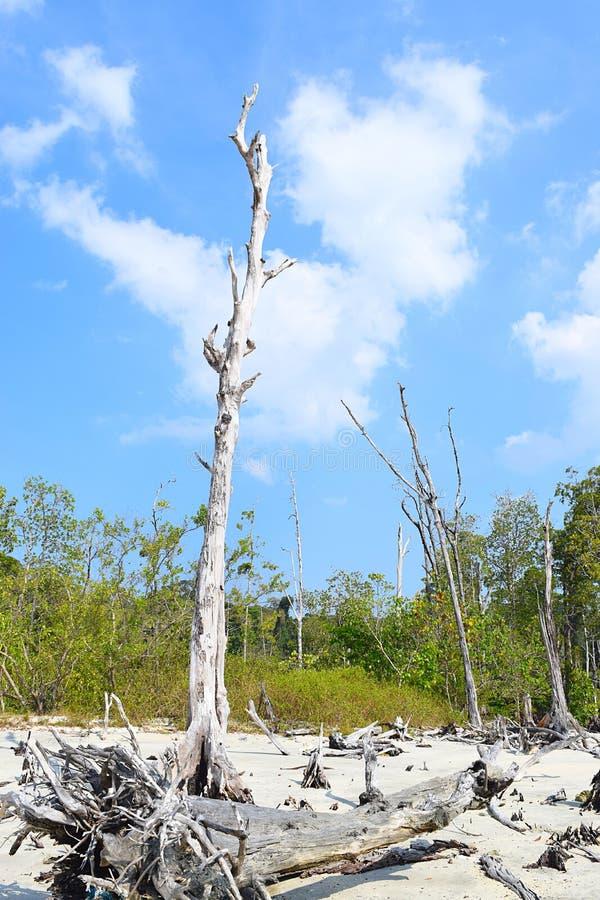 Céu azul, areia branca, árvores desencapadas caídas, e manguezais - praia do elefante, ilha de Havelock, Andaman, Índia imagem de stock royalty free