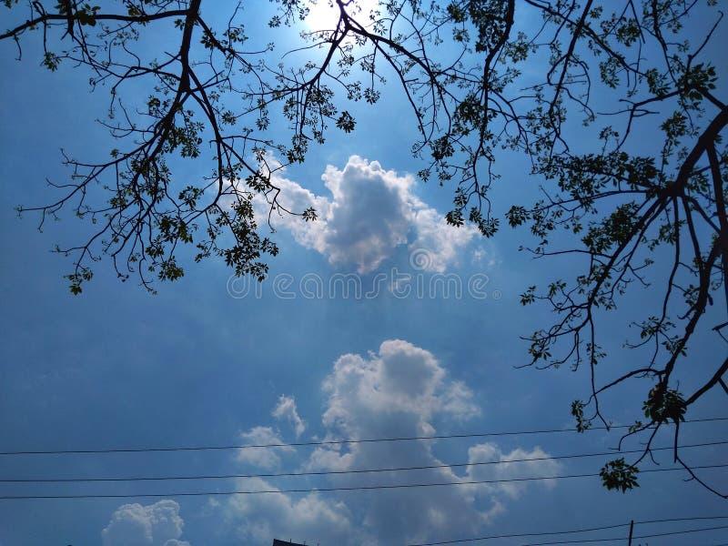 C?u azul bonito com nuvens, Sun e ramos da ?rvore A imagens de stock royalty free