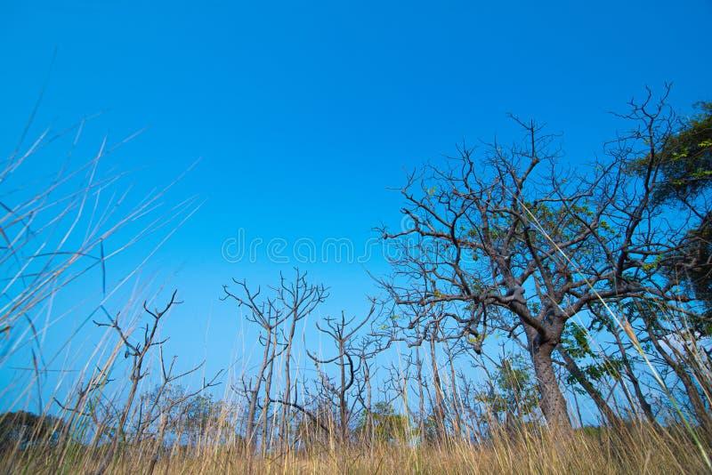 C?u azul com ?rvore seca e grama com fundos e espa?o vazios da c?pia fotos de stock royalty free